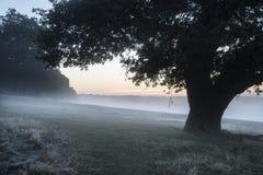 Bedöva dimmigt Autumn Fall soluppgånglandskap över täckt frost Royaltyfria Bilder