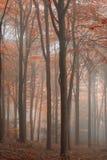 Bedöva färgrikt vibrerande stämningsmättat Autumn Fall dimmigt skogLAN royaltyfria bilder