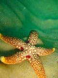 bedöva för sjöstjärna arkivbild