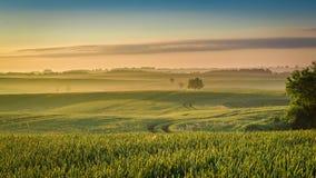 Bedöva gryning på det dimmiga fältet i sommar royaltyfri foto