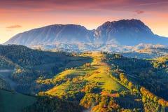 Bedöva höstlandskap med den färgrika skogen, Holbav, Transylvania, Rumänien, Europa royaltyfri fotografi