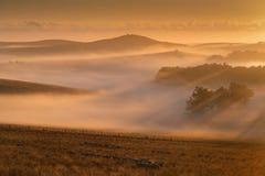 Bedöva klar blå himmel för plats med den gröna grässlätten i morgonsolen Nyazeeländskt jordbruk i landsbygden beta royaltyfri foto