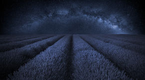Bedöva lavendelfältlandskap med den klara Vintergatangalaxen in Arkivbilder