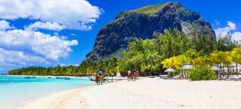Bedöva Le Morne i Mauritius sätta på land hästridningen royaltyfri fotografi