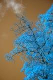 Bedöva ovanligt falskt färgträd- och himmellandskap arkivbilder