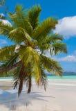 Bedöva palmträdet på en tropisk strand Royaltyfri Bild