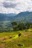 Bedöva risfältlandskap arkivbild