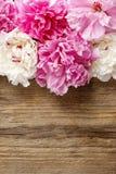 Bedöva rosa pioner på lantlig träbakgrund royaltyfria foton