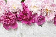 Bedöva rosa pioner på lantligt trä arkivfoton