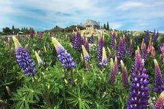 Bedöva sikt av Nya Zeeland Royaltyfria Foton