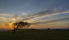 Bedöva solnedgång med det windswept trädet Royaltyfri Foto