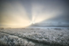 Bedöva solstrålar tänd upp dimma till och med tjock dimma av Autumn Fall Royaltyfria Foton