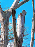 Bedövat träd Royaltyfri Fotografi