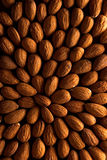 Bed of Almonds. Almonds arranged to look at a single point royalty free stock images