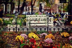 Bed with autumn flowers Stock Photo