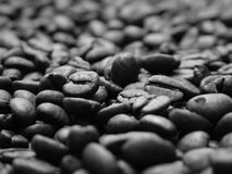 Bed of beans. Macro shot of dark expresso beans Stock Photography