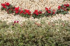 bed blommablommor arkivbilder