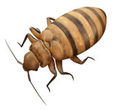 A bed bug Royalty Free Stock Photos