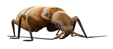 A bed bug Royalty Free Stock Photography