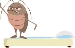 Bed Bug Stock Photography