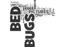 Bed Bugs Pictures Word Cloud. BED BUGS PICTURES TEXT WORD CLOUD CONCEPT Royalty Free Stock Photography