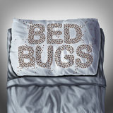 Bed Bugs On Pillow. Bed bug on pillow and in bed as a bedbug infestation concept shaped as text letters as parasitic insect pests under the sheets as a hygiene Stock Photo