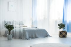 Bed with canopy. Plant in a bucket next to bed with a canopy in simple white bedroom interior royalty free stock photography