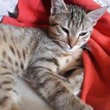 Cat cute Royalty Free Stock Image