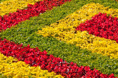 Bed in city park, multi-colored flowers Royalty Free Stock Photography