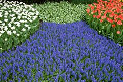 A bed of colorful flowers Royalty Free Stock Photos