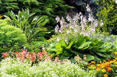 Bed of colorful flowers and plants Stock Image