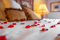 Rose petals over the bed. A bed cover with rose petals as a detail of love royalty free stock photo