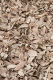 Bed of fallen brown leaves Royalty Free Stock Photos