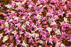 Bed of Fallen flowers Royalty Free Stock Photo