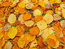 Bed of fallen leaves Stock Image
