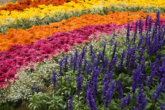 Bed of Floral Rainbow. Beautifully arranged floral display at the Republic Day Flower Show, Lalbagh, Bangalore, India, Asia Stock Photos