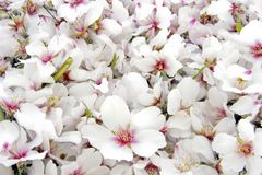 Bed of flowering blossom royalty free stock photography