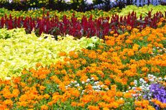 Bed of Flowers Stock Photography