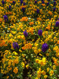 Bed of Flowers in East Grinstead Stock Image