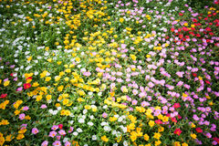 Bed of flowers Royalty Free Stock Image