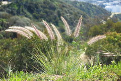 Bed of flowers. Plant growing on top of the hill, overlooking hollywood hills Stock Photography