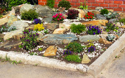 Bed flowers and stones. Flowers and stones on a lawn Royalty Free Stock Photos
