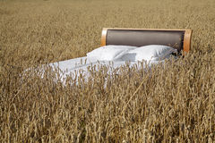 Bed in a grain field- concept of good sleep Stock Photo