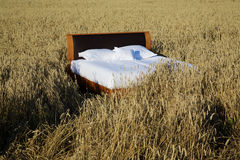 Bed in a grain field- concept of good sleep Royalty Free Stock Images