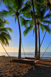 Bed hangs from palm trees with rope Stock Image