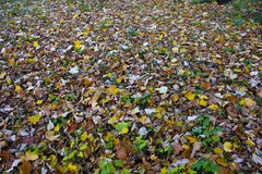 Bed of leaves Stock Photos