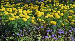 Bed met gele kleuren Stock Foto's
