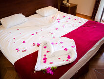 Bed of Red Roses Stock Photos