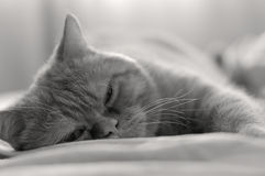Bed relaxation royalty free stock photos