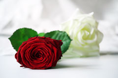 Bed of roses. Red and white rose spread out on the sheets of a bed Stock Image